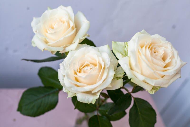 Tre vita rosor på en ljus bakgrund ovanf?r sikt royaltyfri bild
