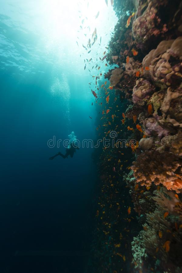 Treasures of the red sea royalty free stock image