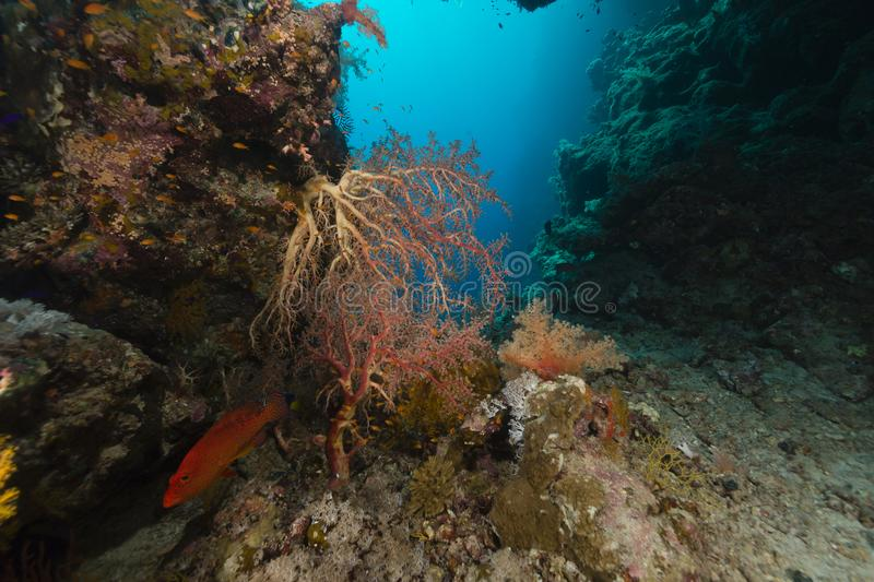 Treasures of the red sea royalty free stock photos