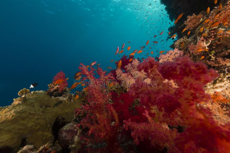 Treasures of the red sea stock images