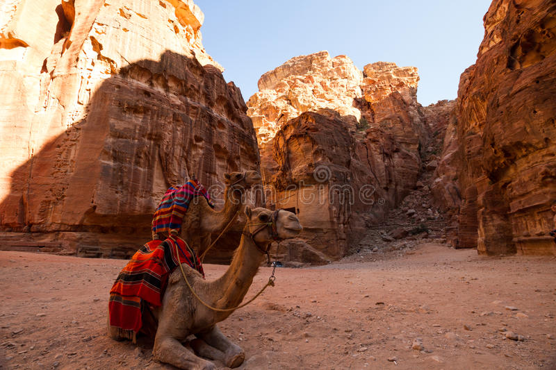 The Treasury, Petra. Camesls in Petra, Jordan, the ancient Nabatean city carved in stone stock image