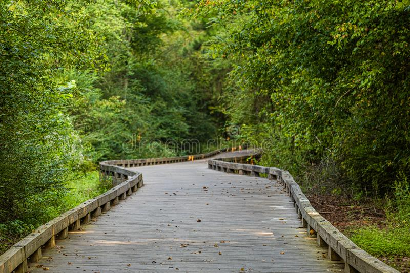 Curving Wood Trail Through Green Forest stock photography