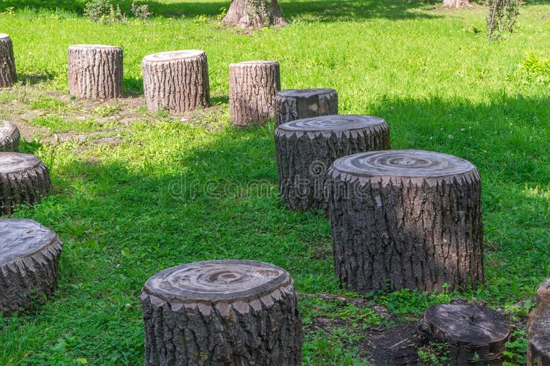 Treated stumps of old rotten wood on green grass on lawn in forested area of city on sunny day. improvement of recreation area for. Recuperation royalty free stock image