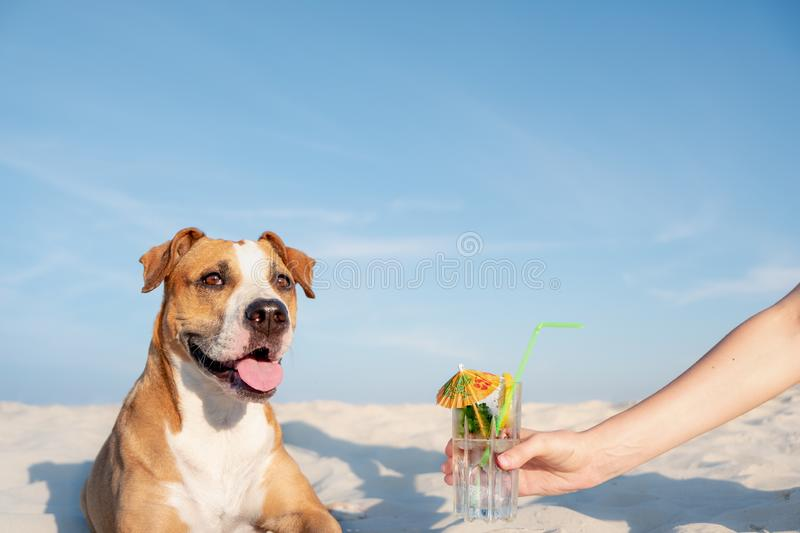 Treating to a glass of cold cocktail drink on the beach. royalty free stock photo