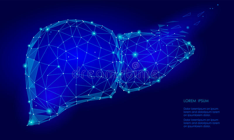 Treatment regeneration decay Human Liver Internal Organ Triangle Low Poly. Connected dots blue color technology 3d model medicine. Healthy body part vector illustration
