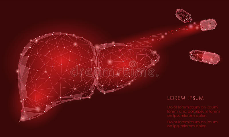 Treatment regeneration decay Human Liver Internal Organ Triangle Low Poly. Connected dots red color technology 3d model medicine c. Apsule tablet drug royalty free illustration