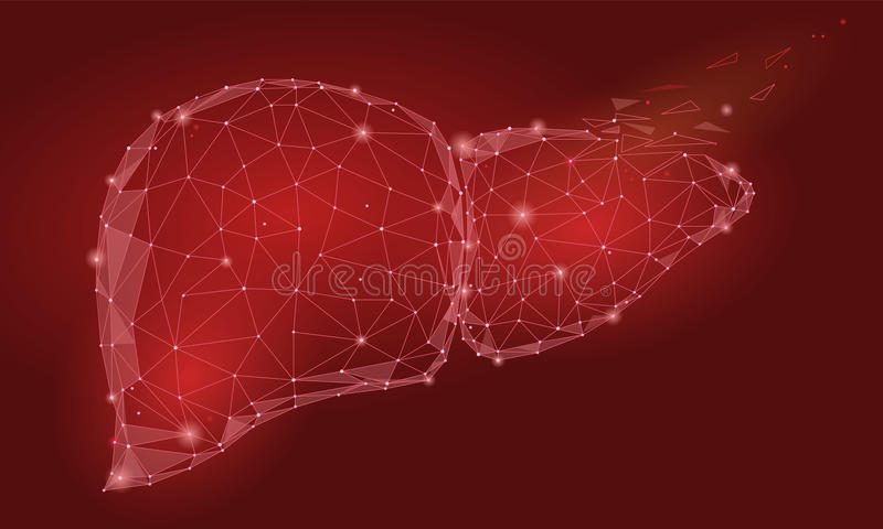 Treatment regeneration decay Human Liver Internal Organ Triangle Low Poly. Connected dots red color technology 3d model medicine h. Ealthy body part illustration vector illustration