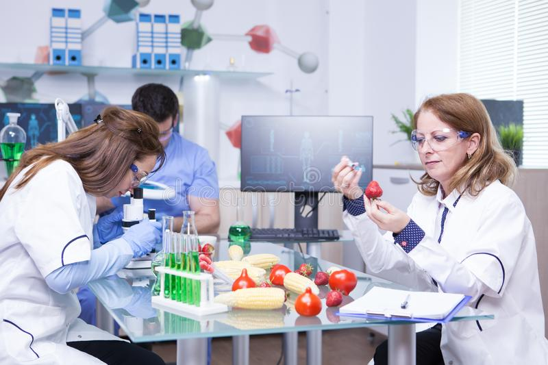 Treatment study on genetically engineered strawberries in laboratory by group of scientist. Test tubes with green solutions royalty free stock photos