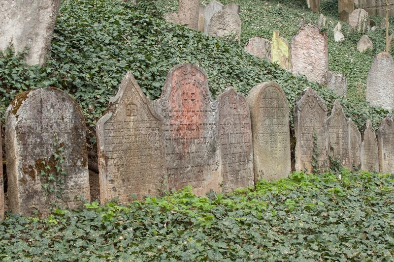 Trebic, Czech Republic, April 23, 2016: Old Jewish Cemetery, the old Jewish part of the city Trebic is listed among UNESCO. The Jewish cemetery is one of the royalty free stock photo