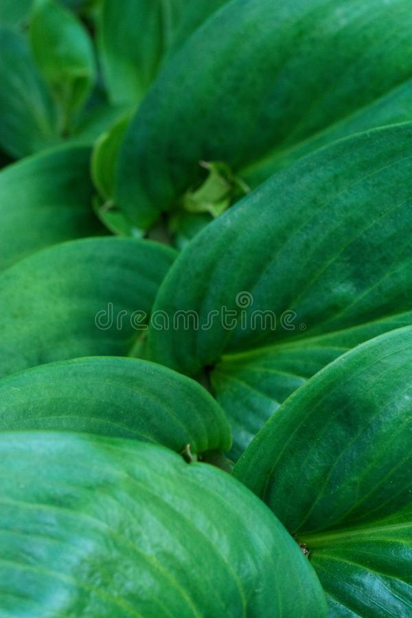 Trecce della forma di foglie verdi immagini stock libere da diritti