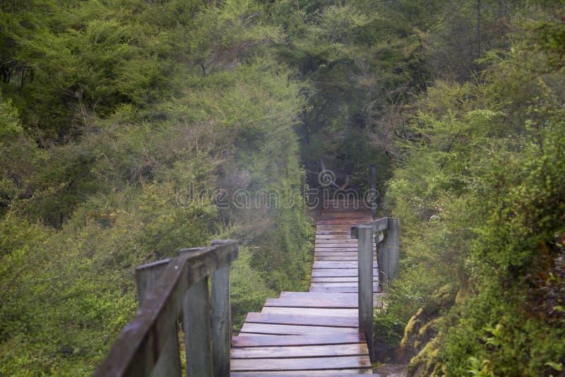 Treden in diep bos, met geothermische stoom stock afbeeldingen