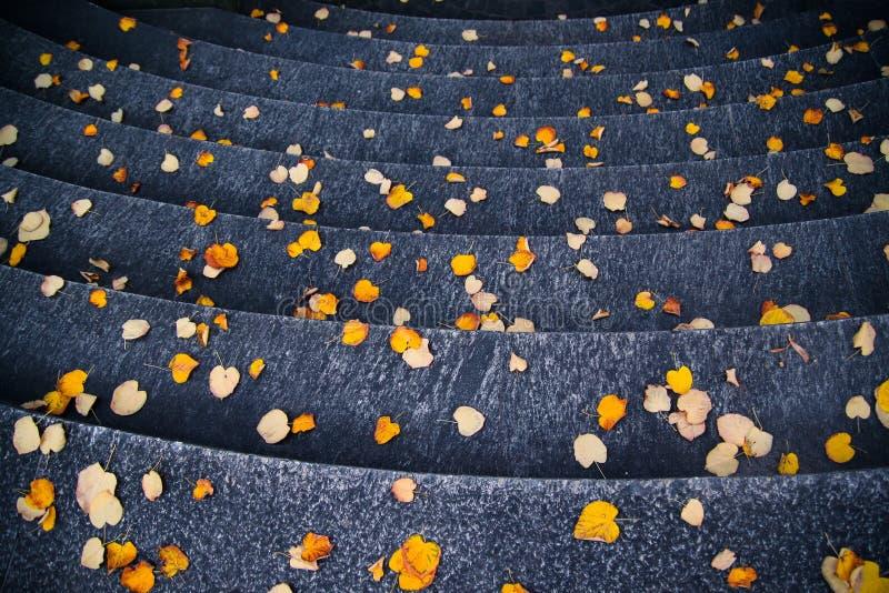 Treden met gele/oranje bladeren in de herfst worden behandeld die stock afbeeldingen