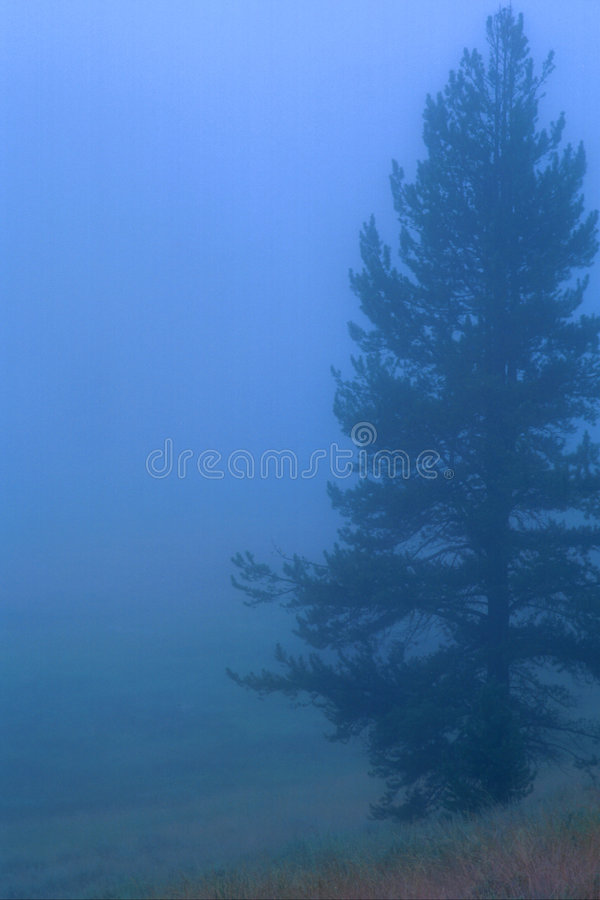 Download Tree 07 stock photo. Image of foggy, deam, nature, outside - 456994