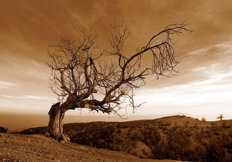 Tree. Alone . struggle alone the existence of s royalty free stock photography