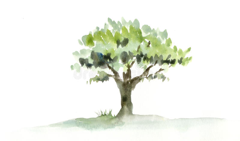 Tree. A painting of a single tree. Watercolor