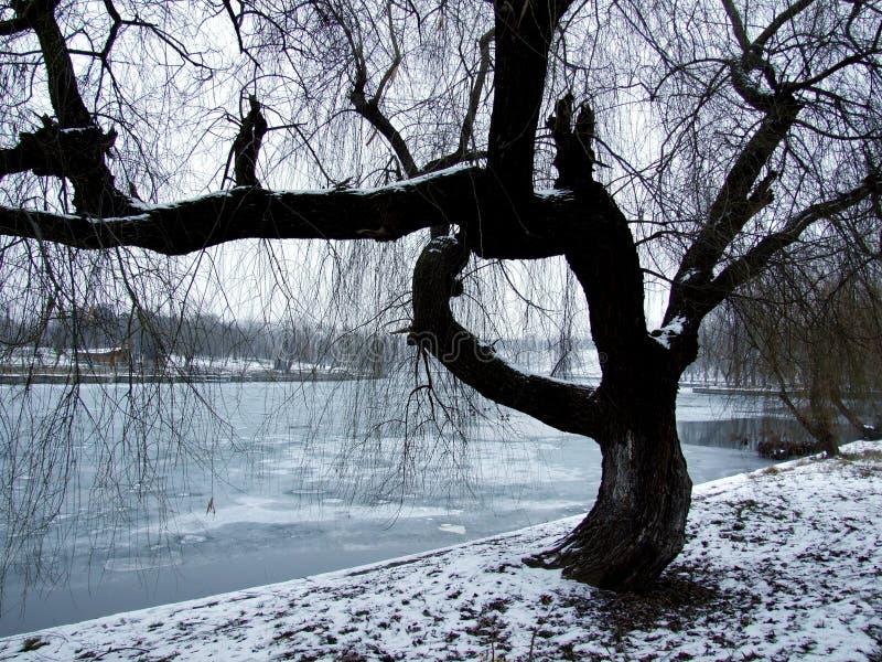 tree arkivfoto