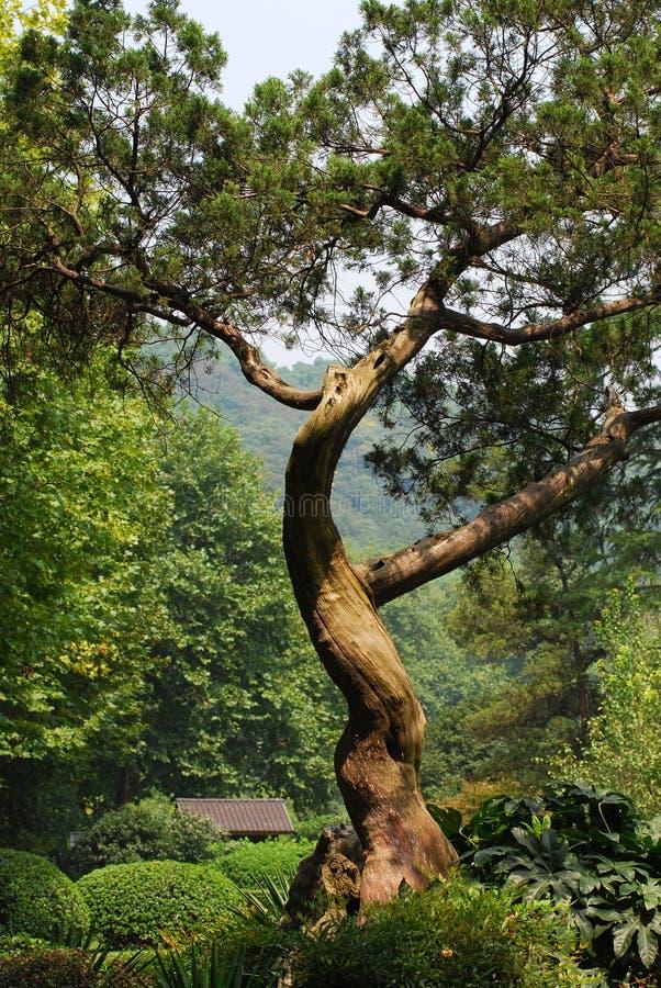 A tree stock image