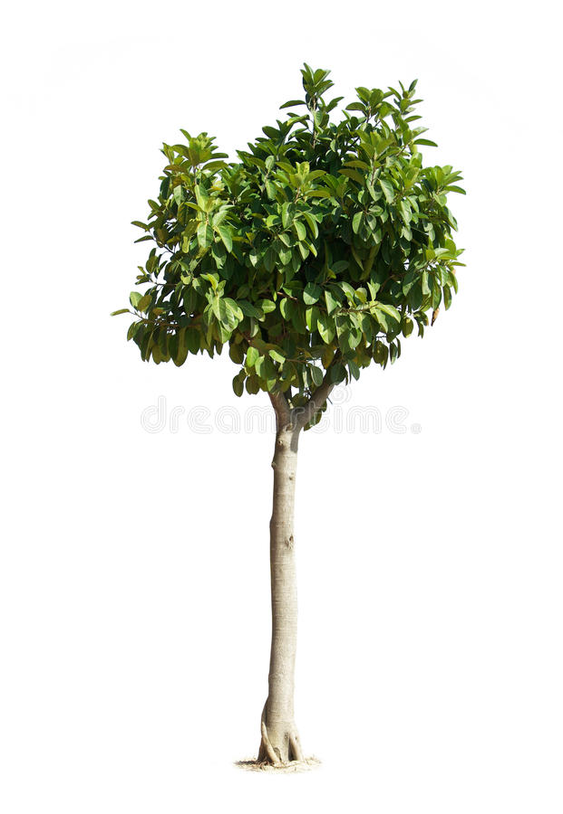 Free Tree Stock Photography - 11521142