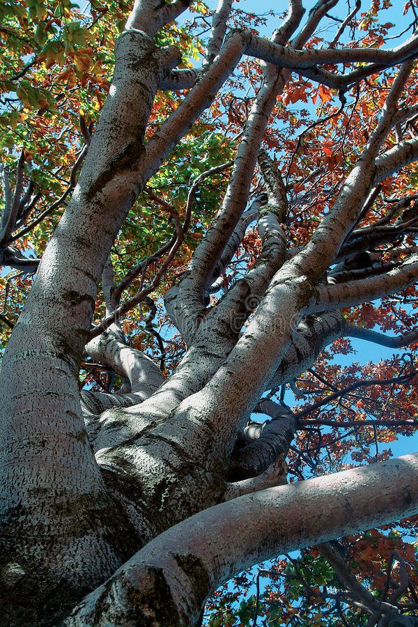 Download Tree stock image. Image of bough, leafs, nature, season - 119521