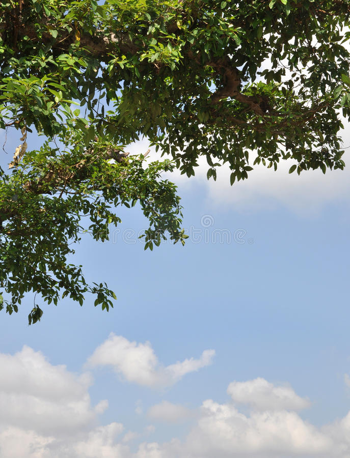 Download Tree stock image. Image of cloud, sunny, resting, tree - 12739401
