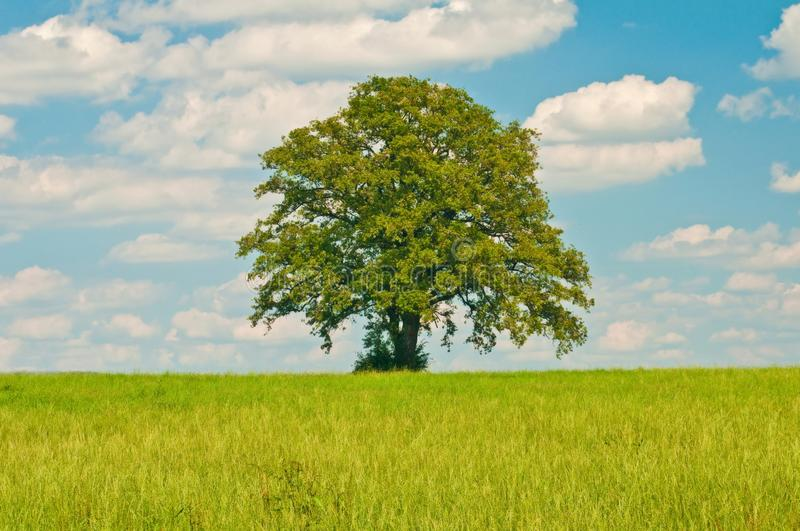 Download Tree Royalty Free Stock Image - Image: 15559856