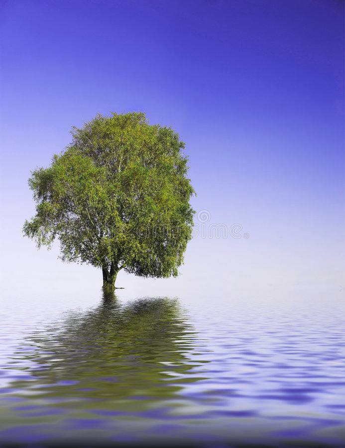 Tree. It's an abstract picture of a tree surrounded by water stock photography