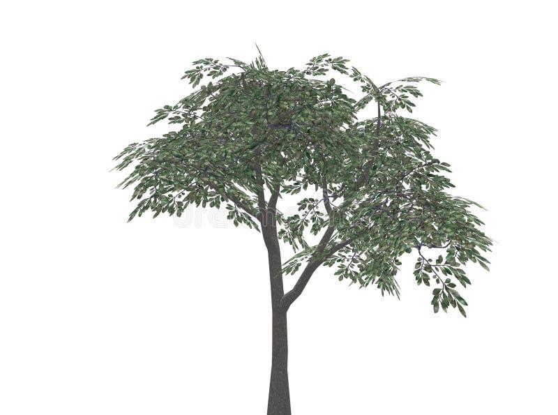 Tree stock illustration