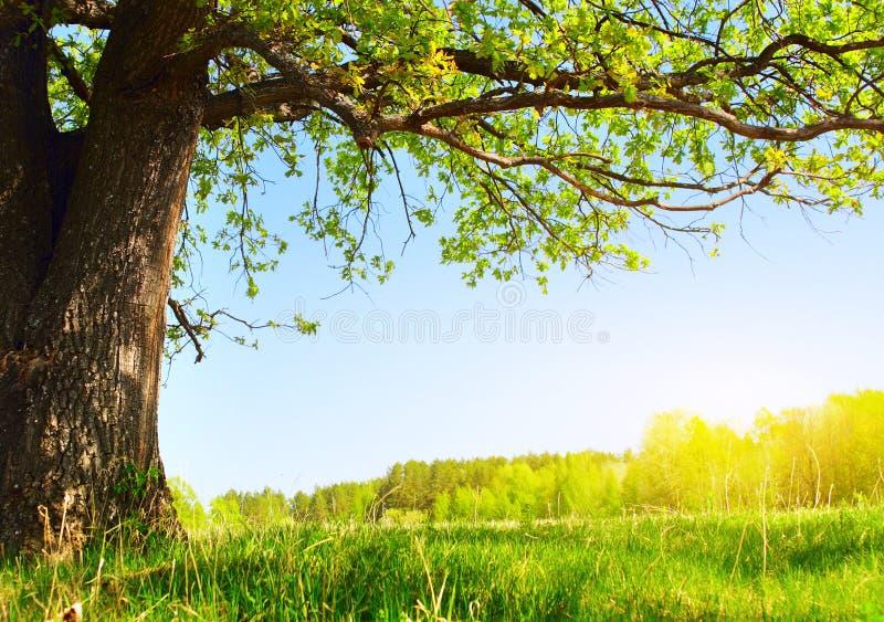 Tree fotografering för bildbyråer