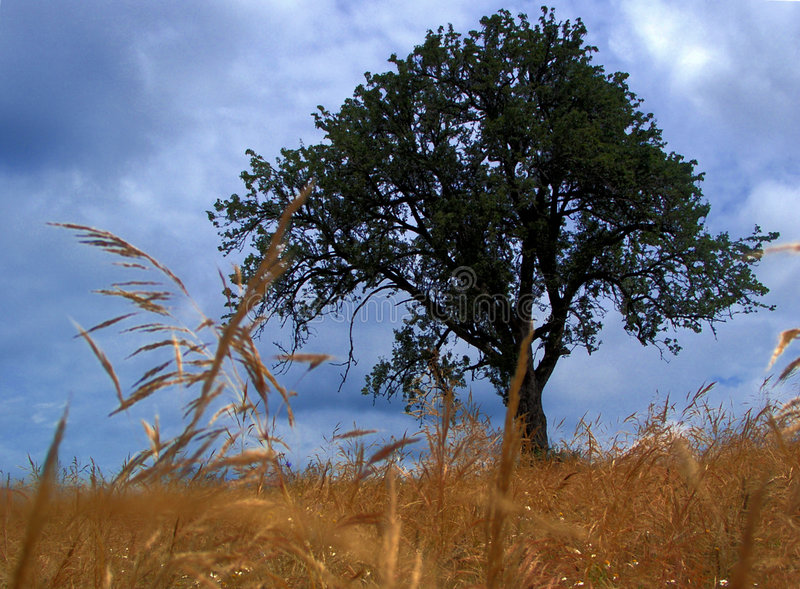 Download Tree... stock photo. Image of grain, house, solitude, storm - 198276