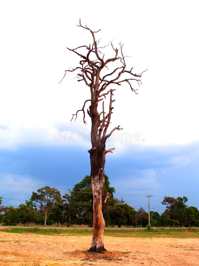 Free Tree 2 Stock Photo - 775920