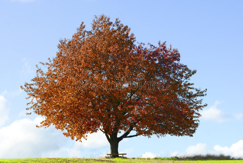 Download The Tree Royalty Free Stock Photography - Image: 21767007