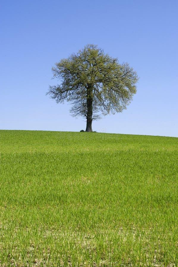 Download Tree arkivfoto. Bild av land, bild, berg, vatten, liggande - 226300
