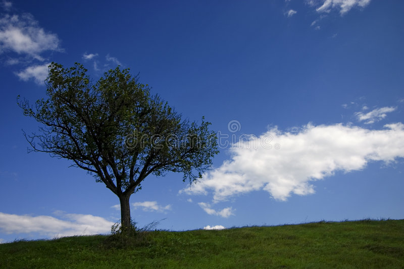 Download Tree stock image. Image of white, green, crown, leaf, grow - 238105