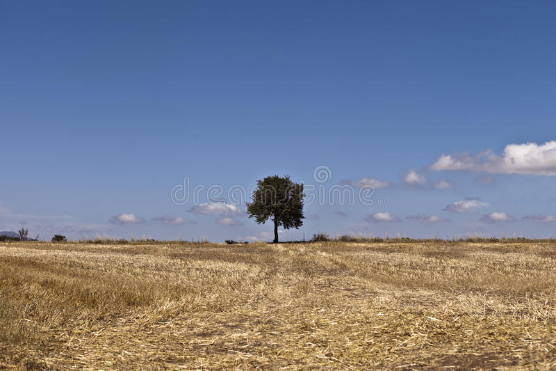Download Tree stock image. Image of cloudy, sunny, green, daylight - 26236803
