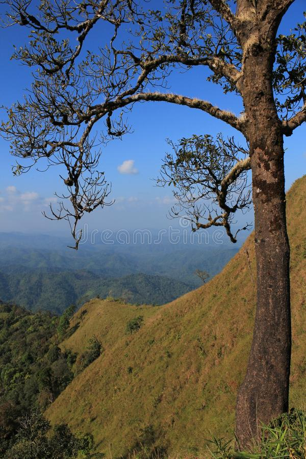 Download The tree stock image. Image of view, nesting, animal - 26619879