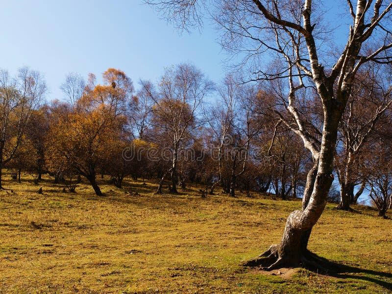 Download Tree stock image. Image of black, harmony, blue, purity - 27243429