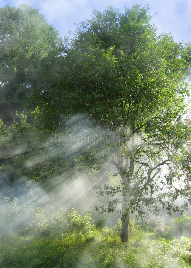 Tree. Autumn tree with mist and sun rays royalty free stock images