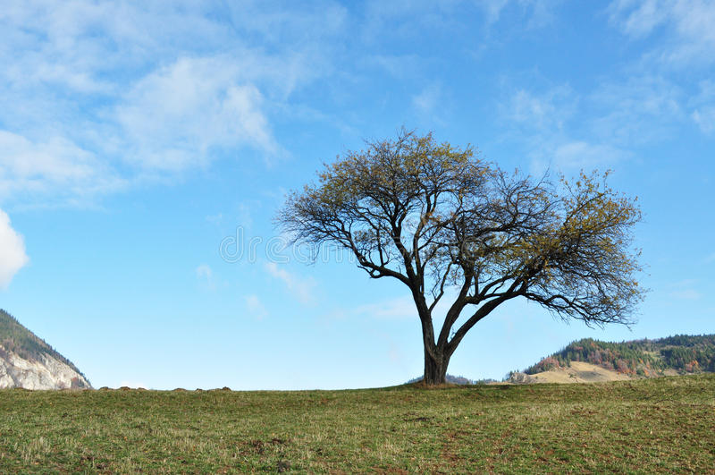 Download Tree stock image. Image of classic, persistent, clouds - 27661299