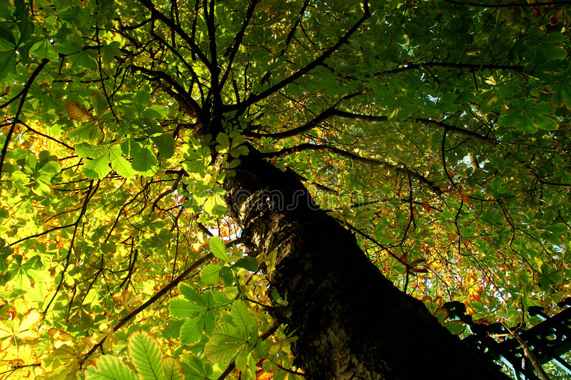 Download Tree Royalty Free Stock Photos - Image: 280228