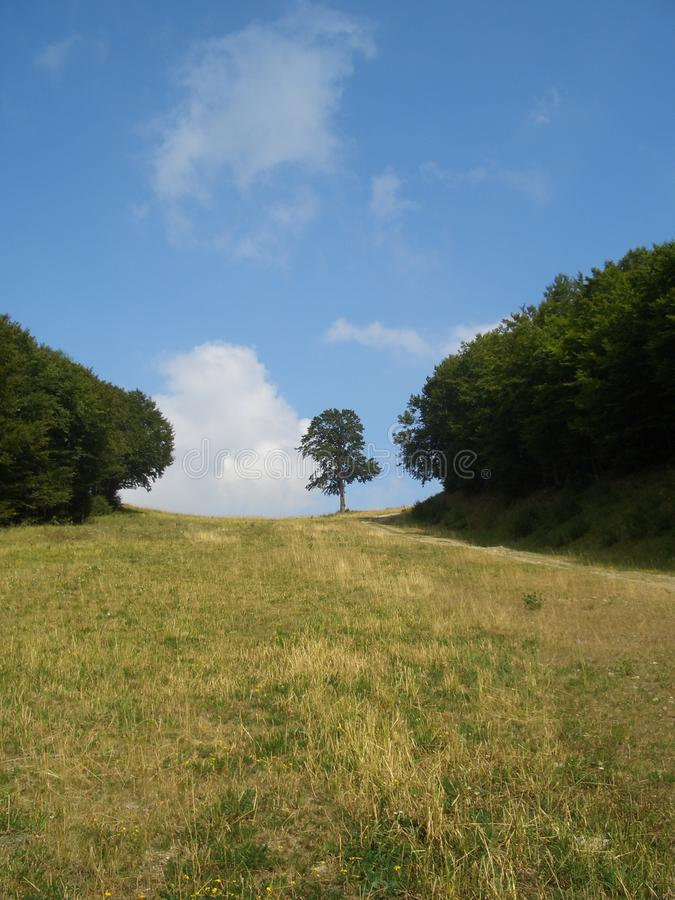 Download Tree stock photo. Image of relax, clouds, piemonte, limone - 28918596