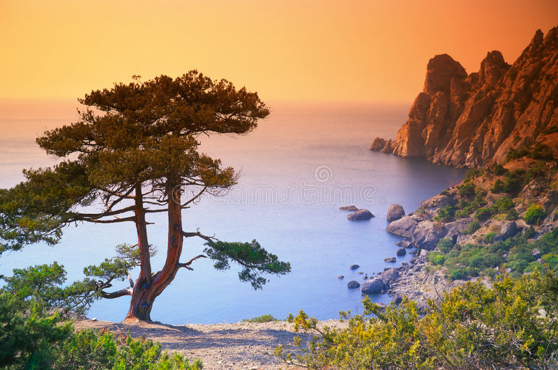 Tree. On a background of the sea royalty free stock photo