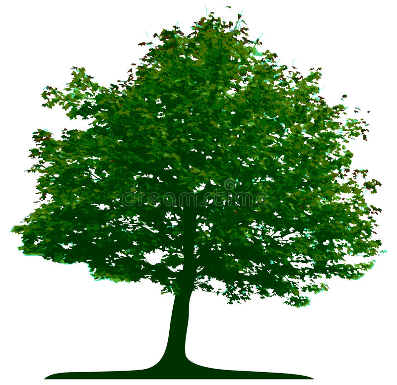 Tree. Isolated on white background royalty free illustration