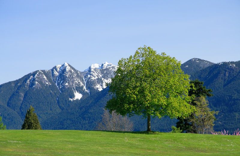 Download Tree stock photo. Image of single, outdoors, landscape - 4134302