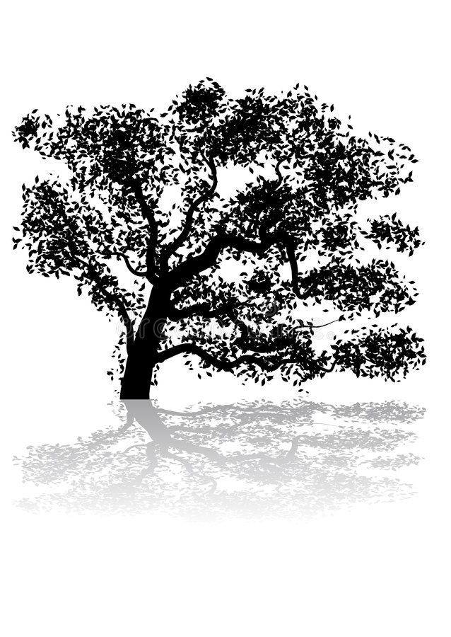 Tree. Abstract vector silhouette illustration of a tree and its shadow stock illustration