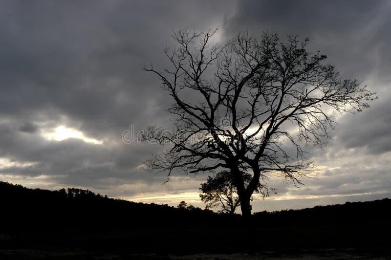 Download Tree stock photo. Image of nature, autumn, quiet, mountain - 451908