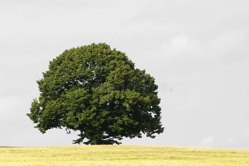 Download Tree stock image. Image of conservation, nature, growth - 472989