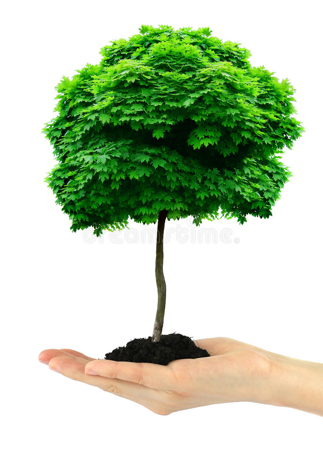 Download Tree stock image. Image of hand, greenpeace, botany, develop - 5315721