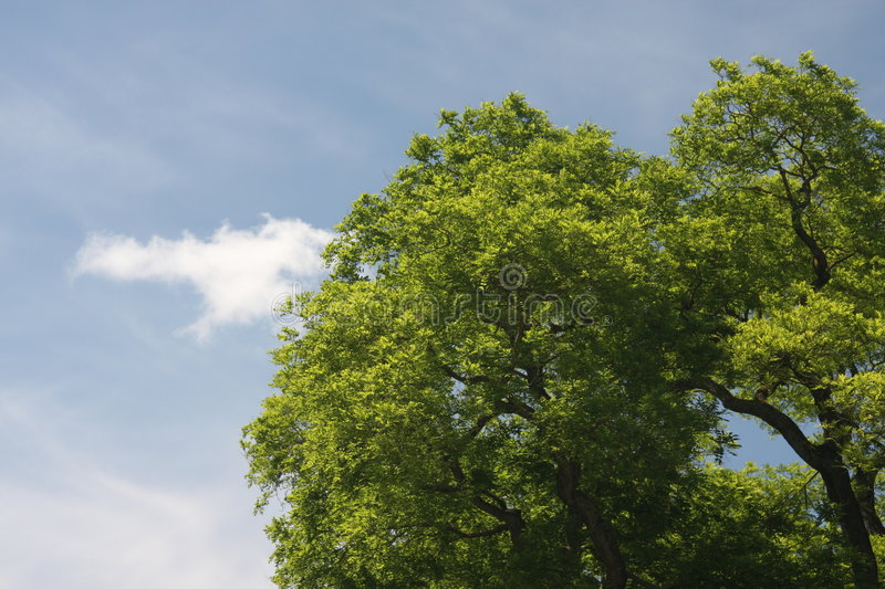 Download Tree stock image. Image of leaves, cloud, nature, leafy - 5411999