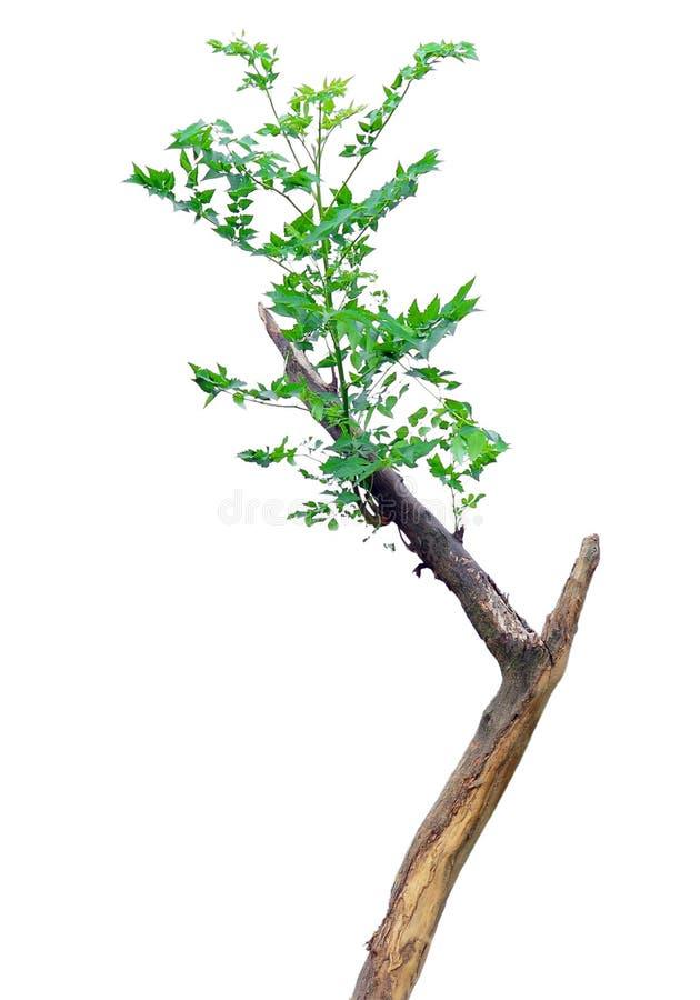 Download Tree stock image. Image of branch, cortex, plants, arboreal - 5862123
