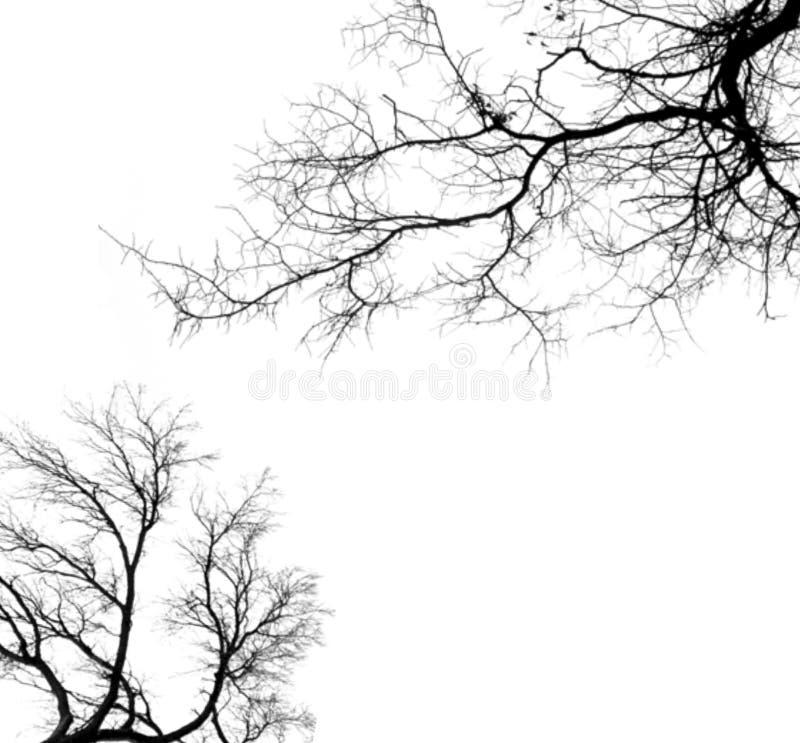 Download Tree stock illustration. Illustration of overcast, forest - 7429255